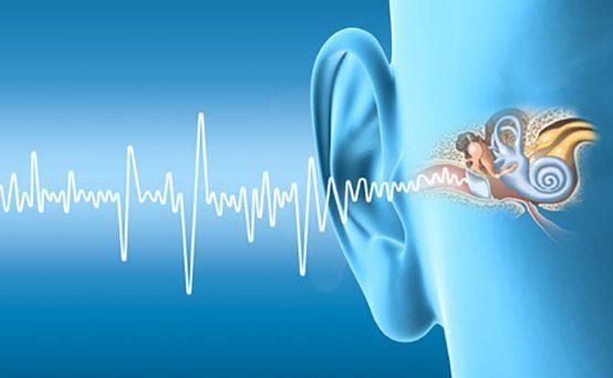 Human ear anatomy, artwork